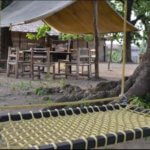 junglewala gallery (3)