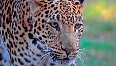 satpura national park junglewala